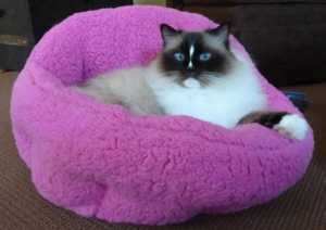 Tips to buying a great cat bed for your home - purple cat bed