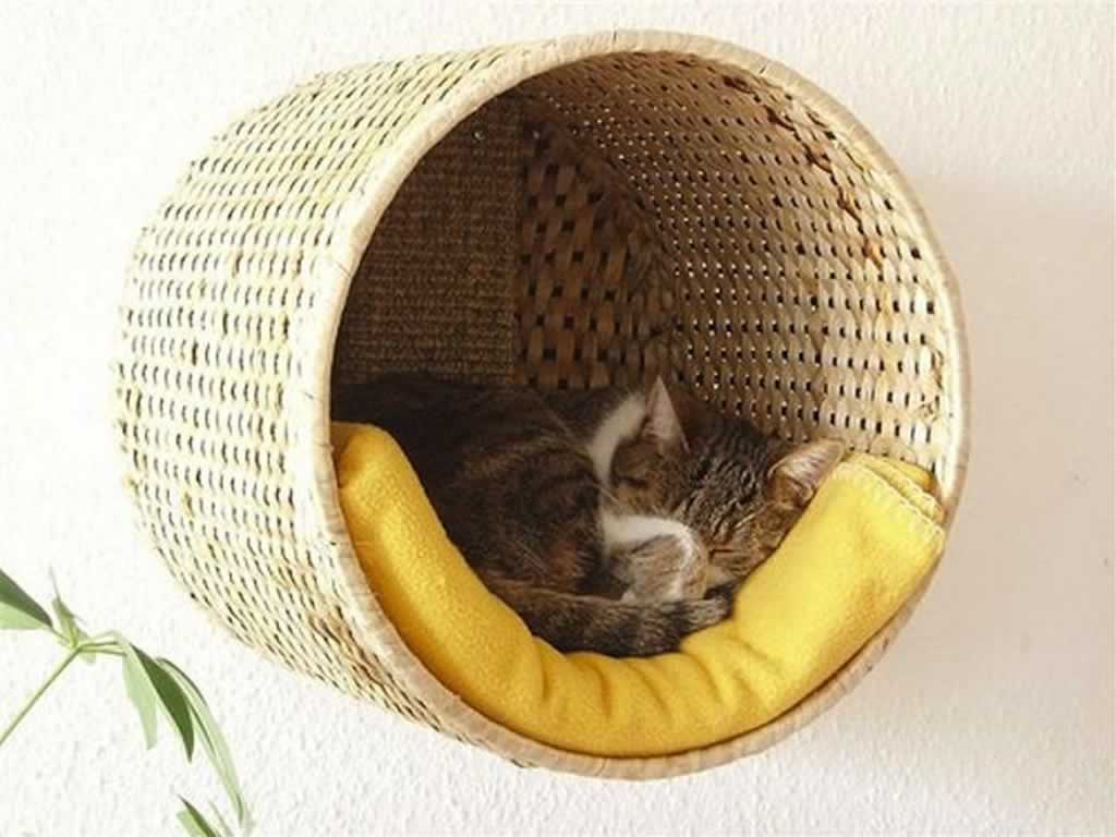 Tips to buying a great cat bed for your home