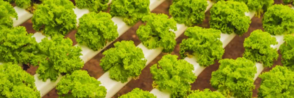Advantages of Using Hydroponic Systems in Your Garden