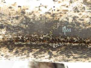 How to Prevent and Kill Bed Bugs in Your Mattress - heavy infestation