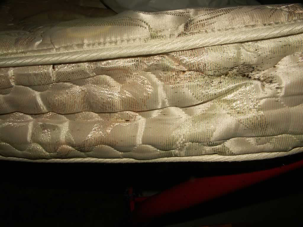 How to Prevent and Kill Bed Bugs in Your Mattress - infestation