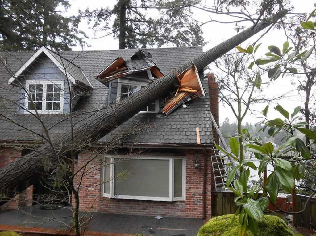 Potential roof problems and how to avoid them - tree damage