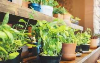 5 Ways to Keep Gardening Indoors When Winter Comes Around