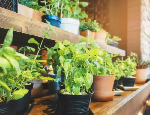 5 Ways to Keep Gardening Indoors When Winter Comes Around