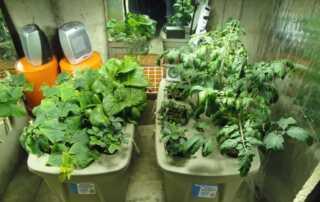 5 ways to keep gardening indoors when winter comes around - seedlings