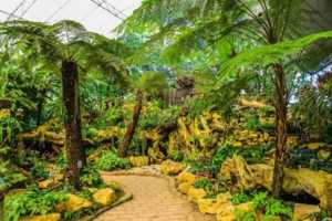 Does Landscaping Improve Appraised Value - palm trees
