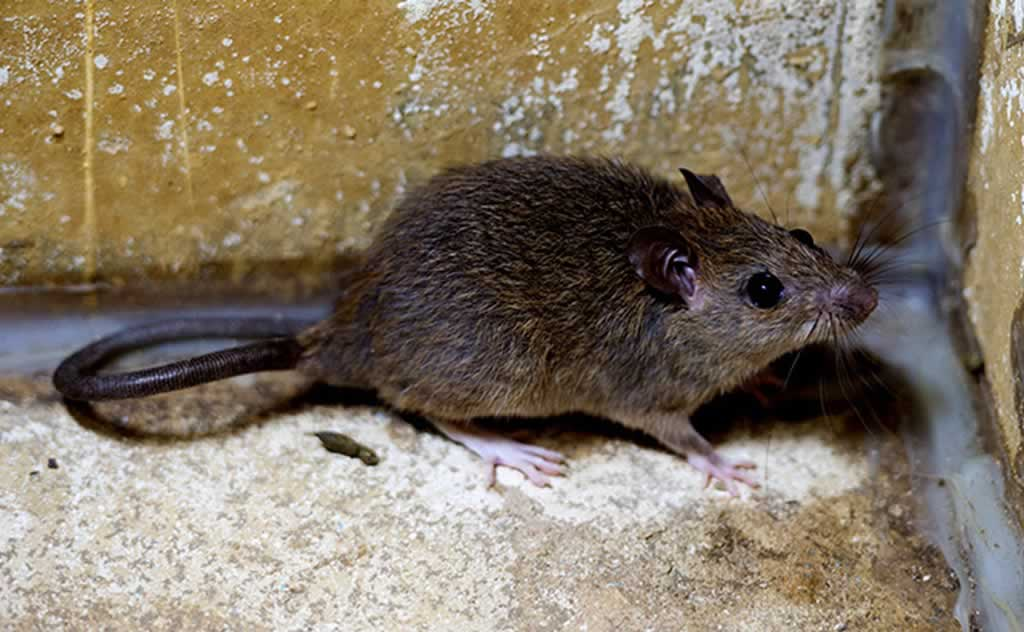 How to Find the Best Service for Getting Rid of Palm Rats