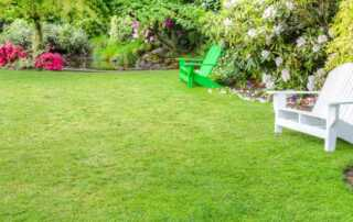 How to Renovate Your Lawn Like a Pro