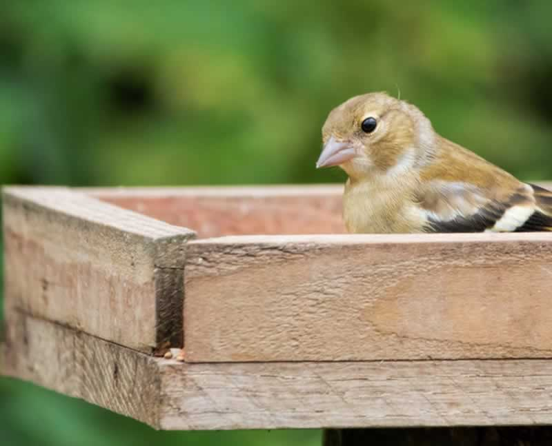 How to build your own bird table at home