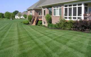 How to renovate your lawn like a pro - beautiful lawn