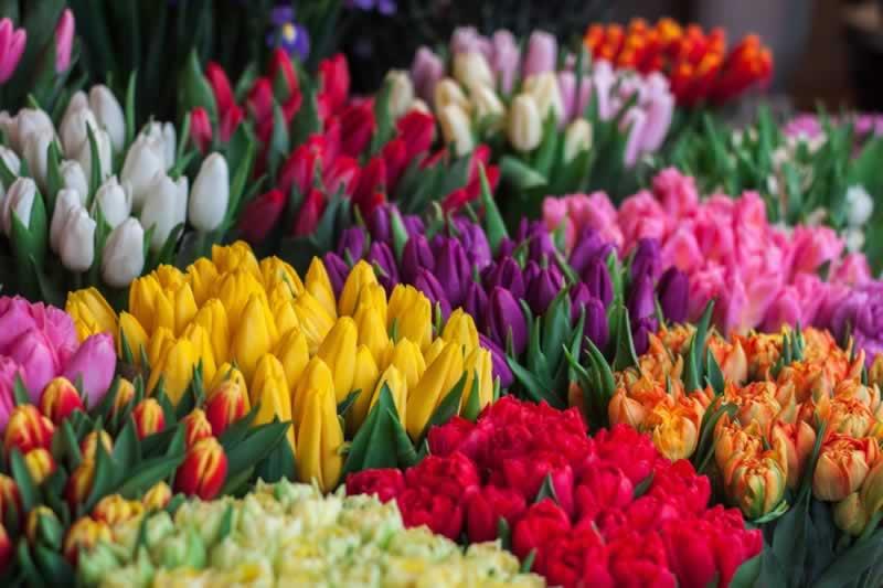 Florist Taboos You Should Break