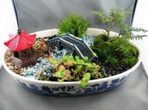 6 Plants That Will Perfectly Fit Into A Little Dish Garden