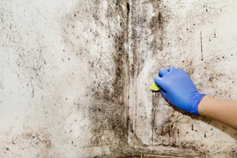 4 Things to Consider Before Hiring a Mold Remediation Pro - cleaning the mold