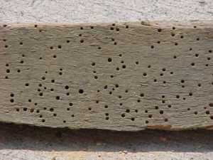 7 Signs That Your Home Has a Termite Infestation - termite holes