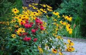 Grow These Classic Perennials to Attract Pollinators