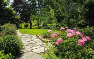 Grow These Classic Perennials to Attract Pollinators - Peony
