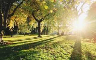 Tree Lopping & Alternative Methods of Tree Maintenance