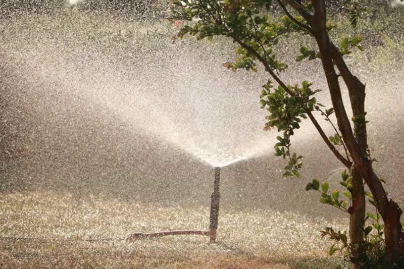 Tree Lopping & Alternative Methods of Tree Maintenance - watering