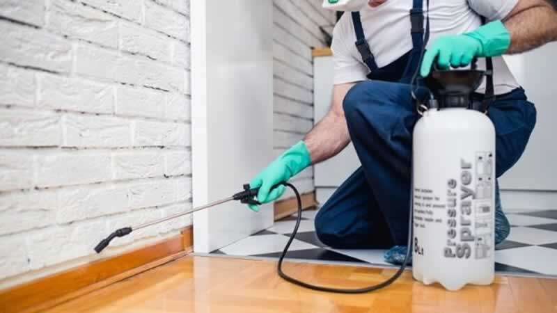 Why you need to hire a pest control professional - spraying