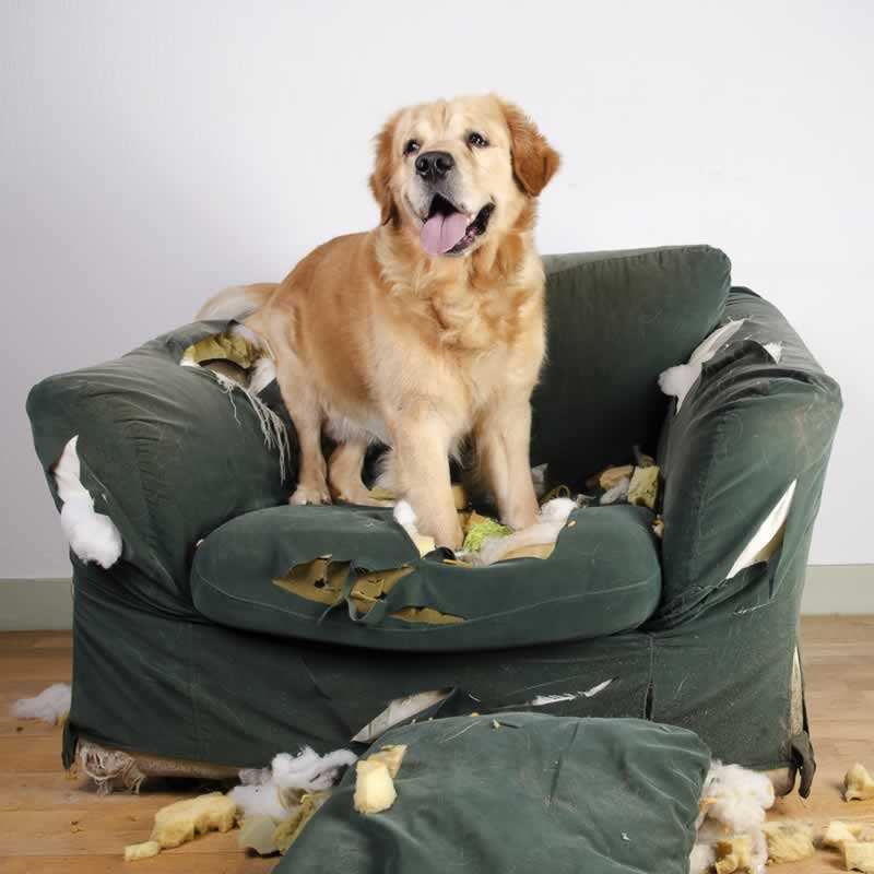 How to Stop Your Dog from Chewing on Furniture