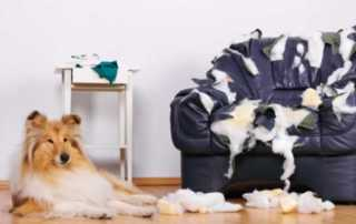 How to stop your dog from chewing on furniture - chewed up armchair