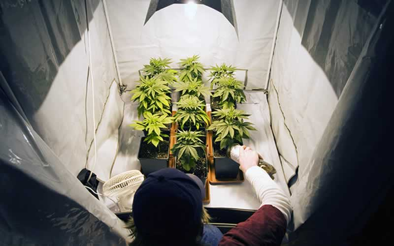 Rock your Indoor Cannabis Garden - growing tent