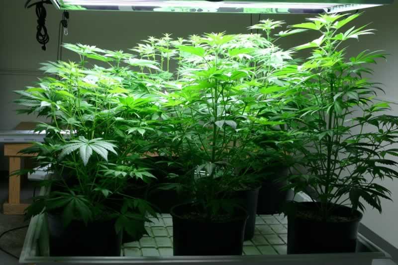 Rock your Indoor Cannabis Garden