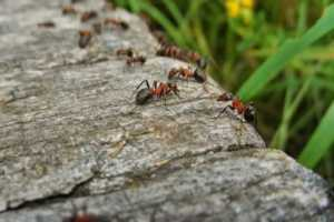 5 Pest Control Remedies You Can Do On Your Own - ants