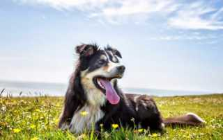 DIY herbal dewormers for dogs - happy dog
