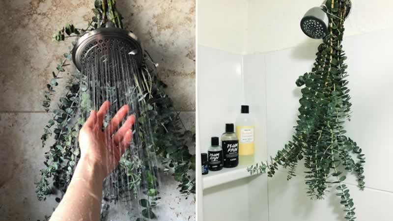 HOW TO REFRESH YOUR HOME WITHOUT SPENDING A SINGLE DOLLAR - Eucalyptus in the shower