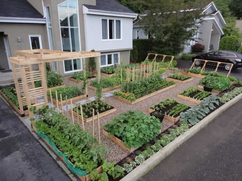 How to create an organic vegetable garden at home