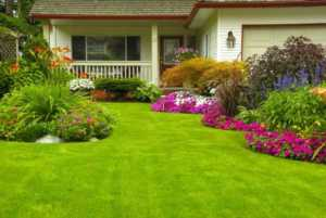 How to mow a lawn professionally - lawn project