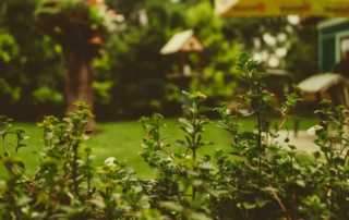 Want to Improve Your Outdated Backyard - gardening ideas