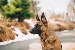 Easy and Effective DIY Home Security Hacks - security dog