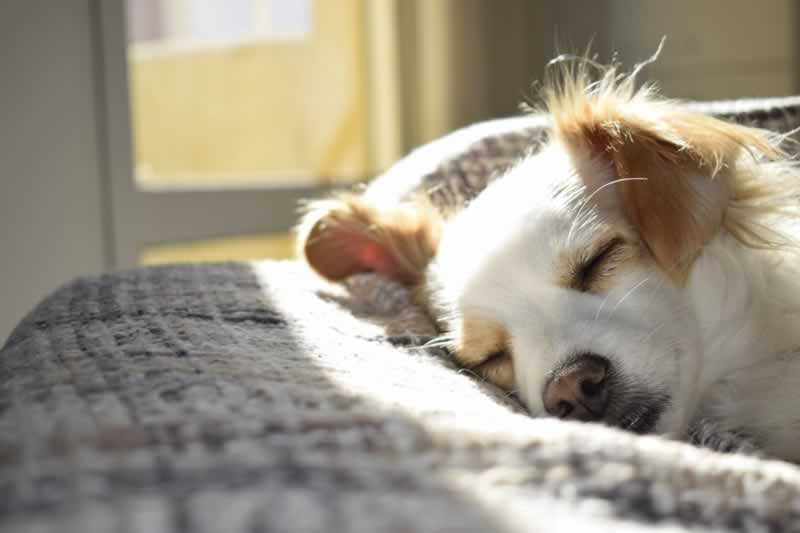 How to Select the Best Vacuum for Pet Hair - puppy