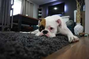 Tips and Tricks to Keep Your Carpets Looking Brand New - carpet protector