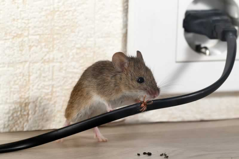 5 Signs You Have a Mouse in Your House - mouse and wire