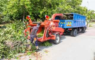 How To Hire A Tree Service