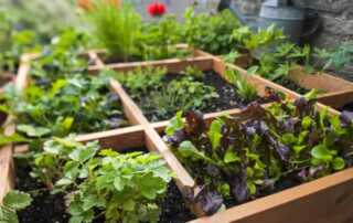 How to grow vegetables in a small garden