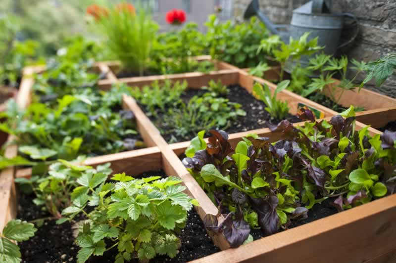 How To Grow Vegetables In A Small Garden Handyman Tips