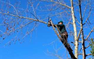 Tree Trimming 101