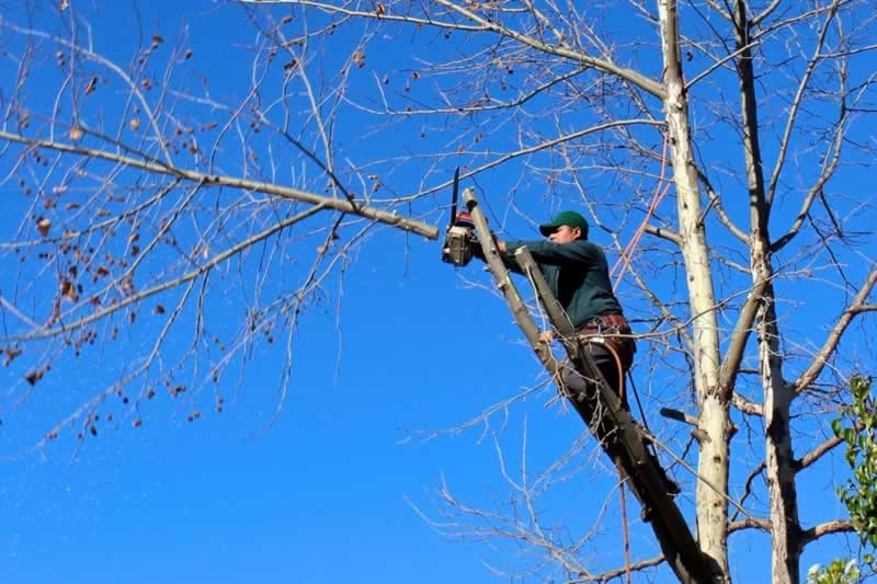 Tree Trimming 101