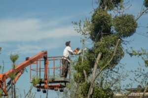What Does A Tree Removal Service Actually Do