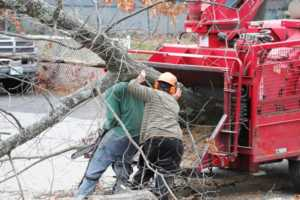 What Does A Tree Removal Service Actually Do - shredding