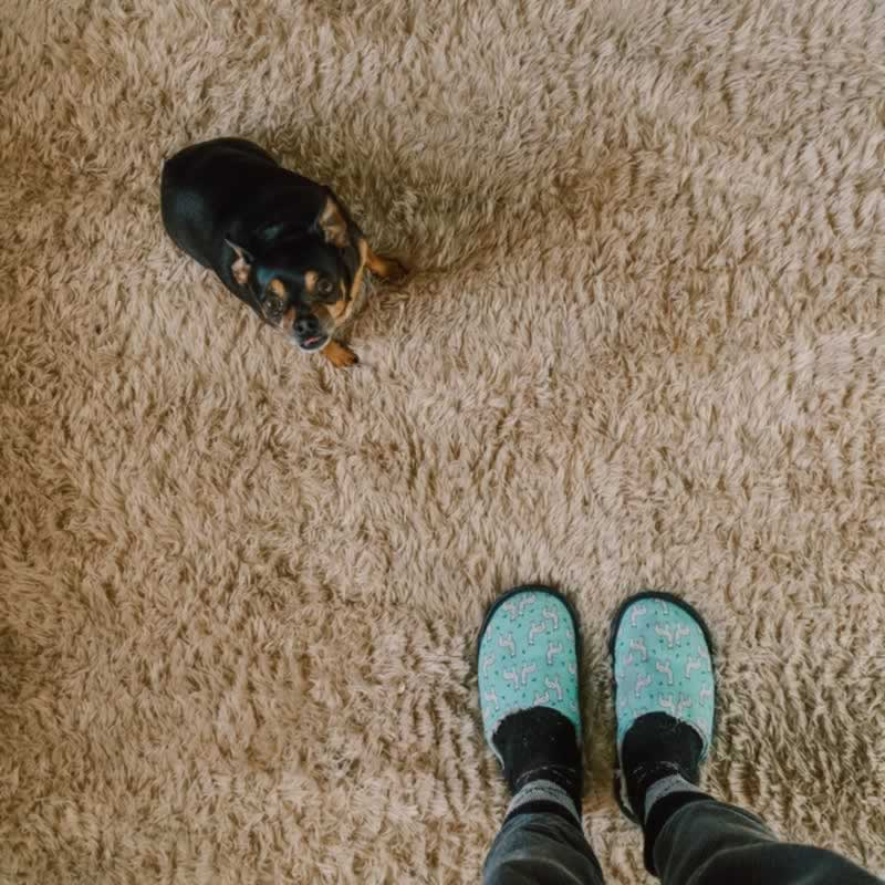 Which Type Of Carpet Should You Pick - small dog on carpet