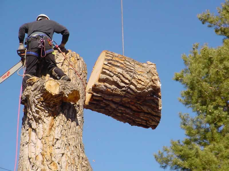 A Guide to Hiring a Tree Lopping Service - cutting the tree