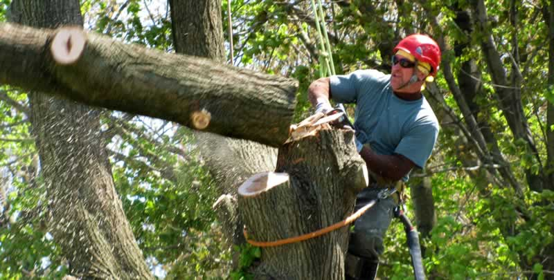 A Guide to Hiring a Tree Lopping Service