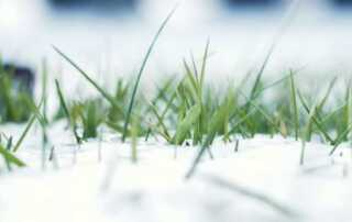 How to Protect Your Lawn from Harsh Weather Conditions