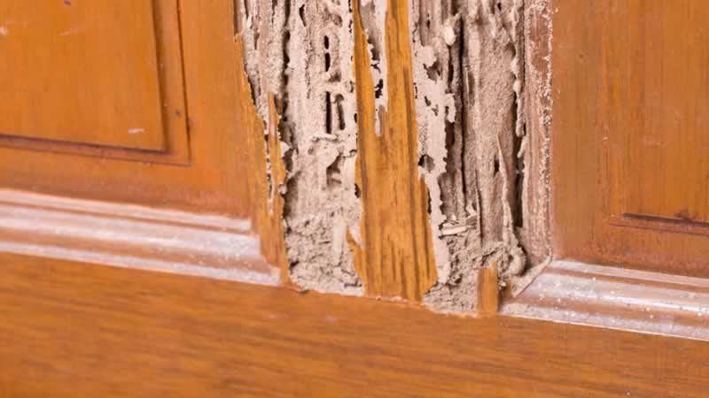 How to keep your home safe from pest - termites