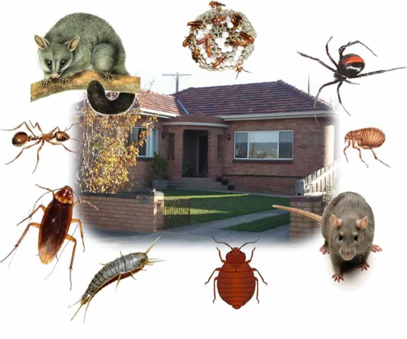 How to keep your home safe from pest